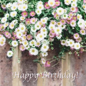 White daisies happy birthday card