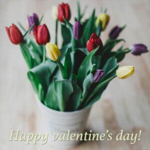 Valentine's Day Tulips in a white bucket