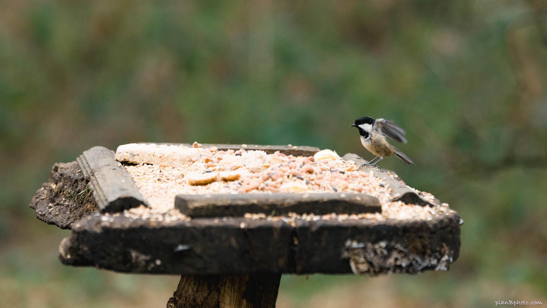 Bird on a bird feeder