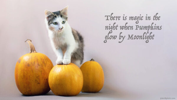 Halloween quote with pumpkins