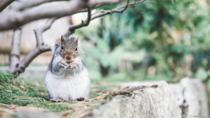Squirrel background images
