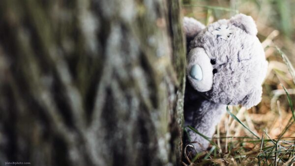 Teddy bear behind a tree