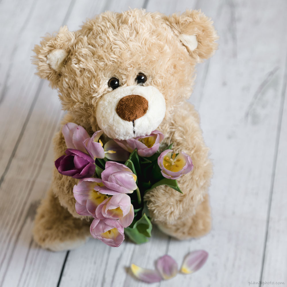 Teddy bear holding tulip flowers bouquet