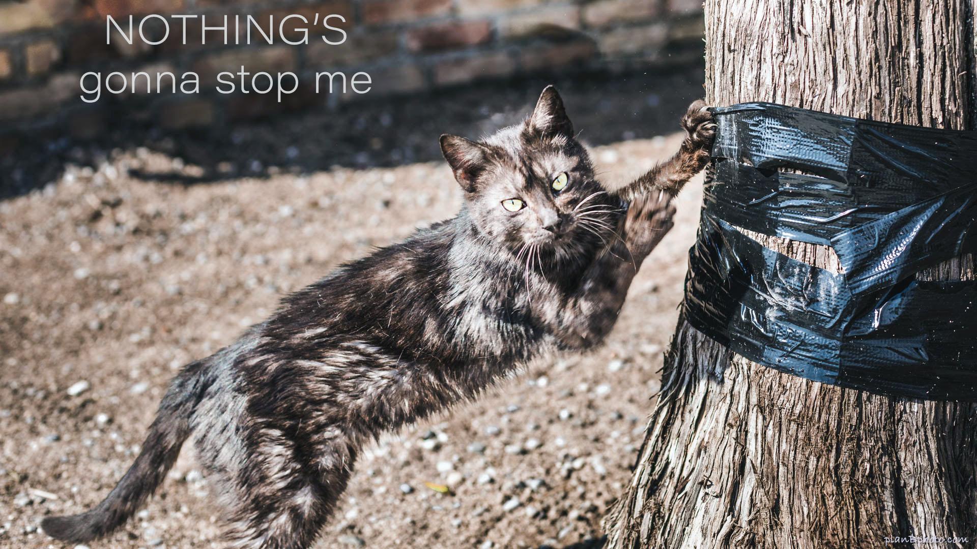 Dark cat scratching a tree