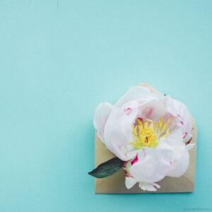 White peony flower envelope